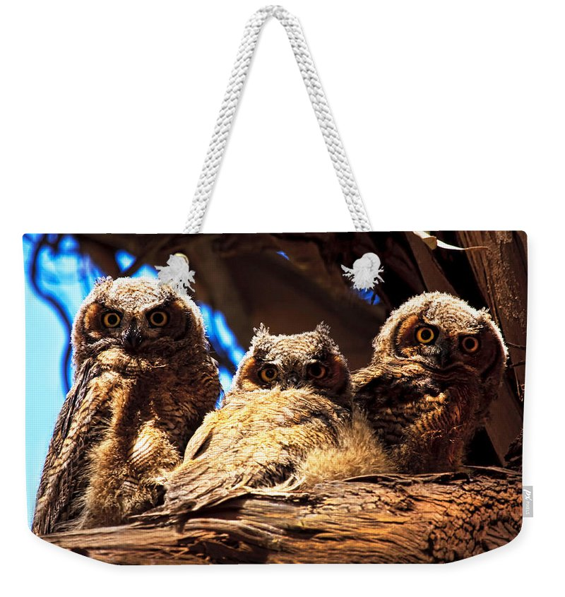 Owl Weekender Tote Bag featuring the photograph Hoo Are You by Beth Sargent