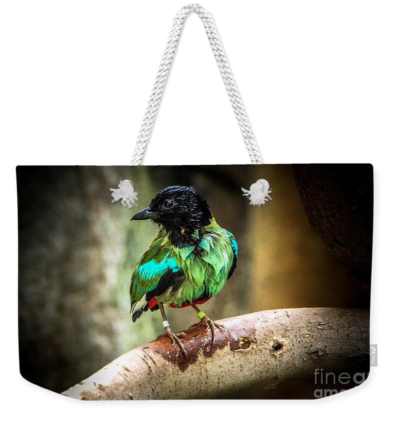 Bird Weekender Tote Bag featuring the photograph Hooded Pitta by Grace Grogan