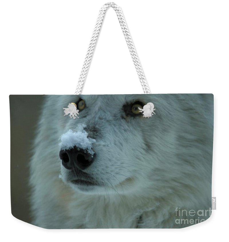 Alpha Wolf Weekender Tote Bag featuring the photograph Hopeful Gaze by Adam Jewell