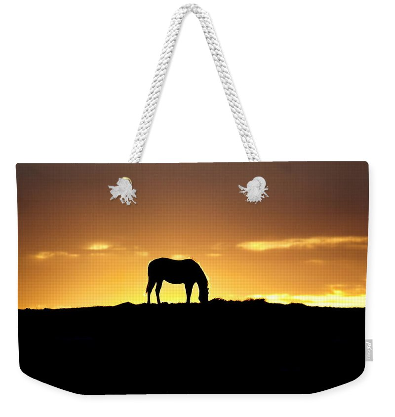 Sunrise Weekender Tote Bag featuring the photograph Horse At Sunrise by Alan Hutchins