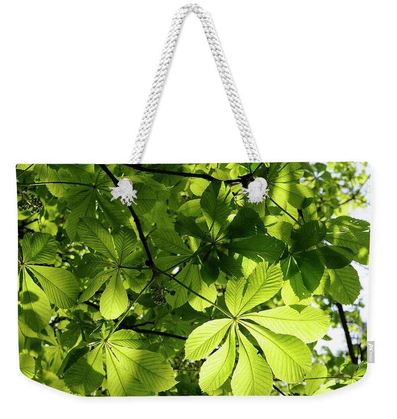 Backgrounds Weekender Tote Bag featuring the photograph Horse Chestnut Leaves by Jeffoto