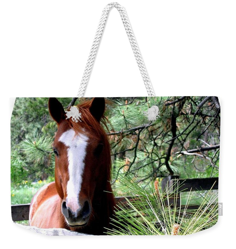 Horse Weekender Tote Bag featuring the photograph Horse Country by Will Borden