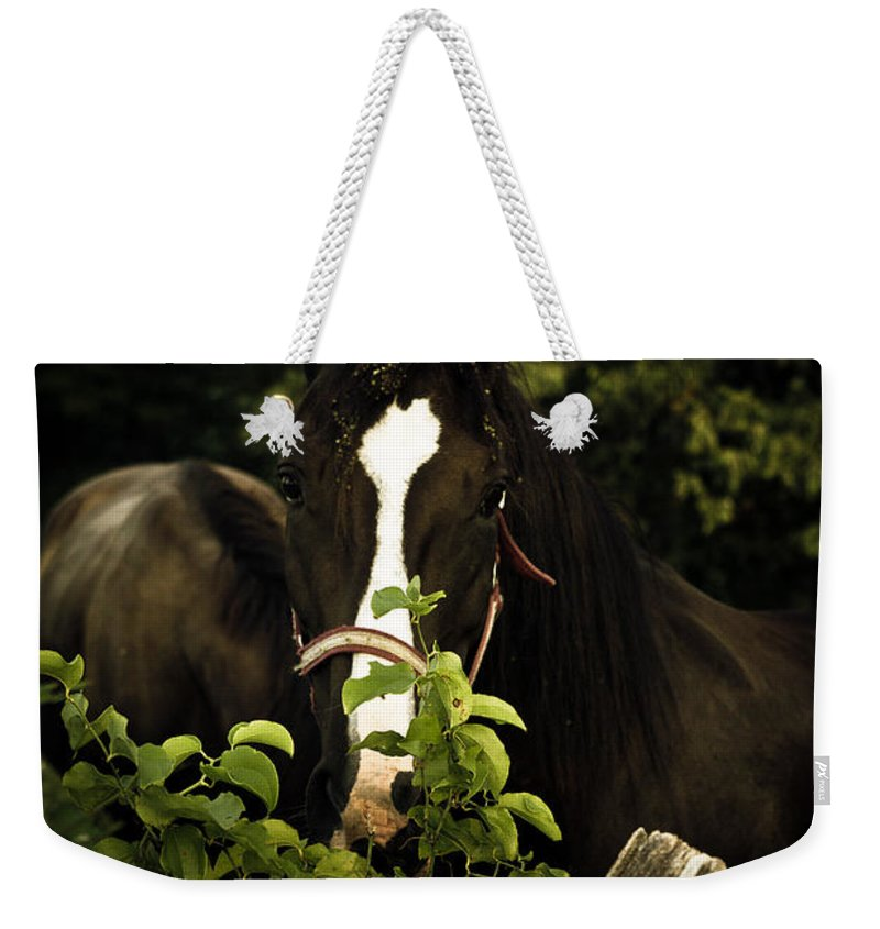 Horse Weekender Tote Bag featuring the photograph Horse Fence by Shane Holsclaw