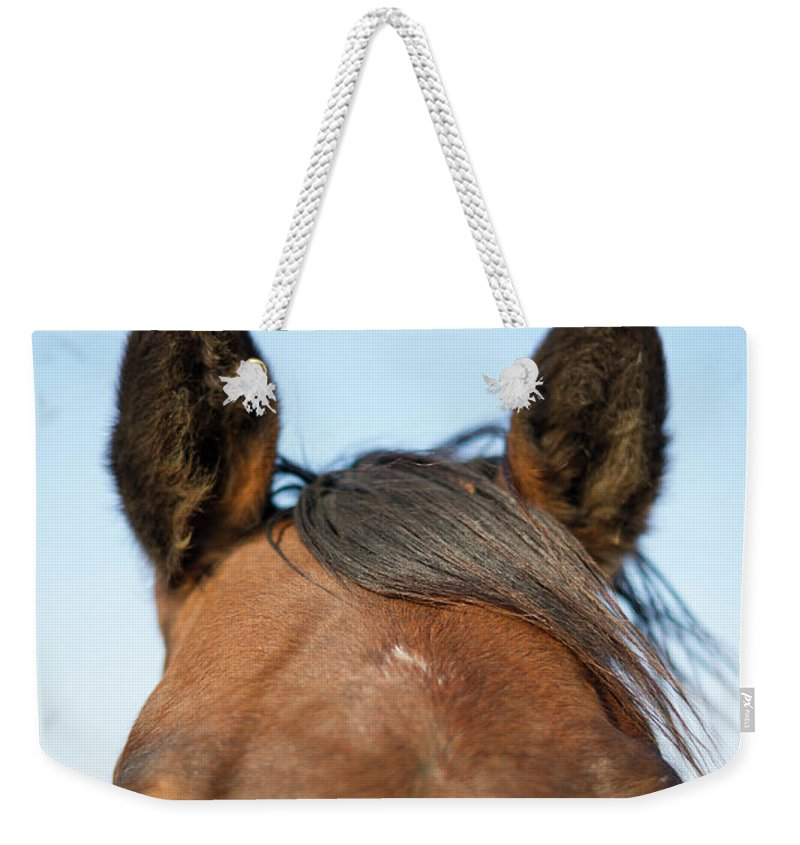 Horse Weekender Tote Bag featuring the photograph Horse Standing In Pasture In Autumn by Chris Hendrickson