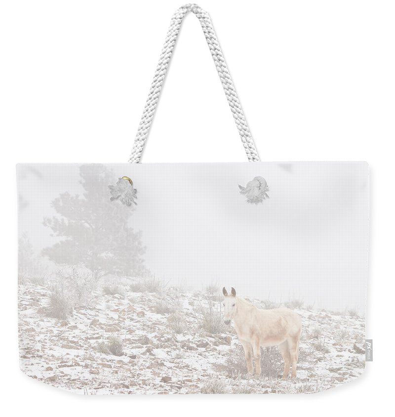 Horses Weekender Tote Bag featuring the photograph Horse With Winter Season Snow And Fog by James BO Insogna