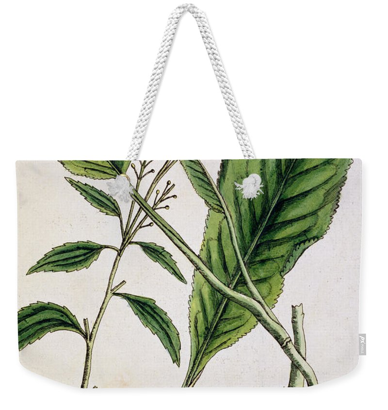 Cutting Weekender Tote Bag featuring the painting Horseradish by Elizabeth Blackwell