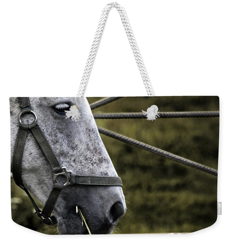Horse Weekender Tote Bag featuring the photograph Horse's Head by Angel Ciesniarska