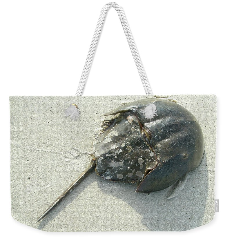 Crab Weekender Tote Bag featuring the photograph Horseshoe Crab - Limulus Polyphemus by Mother Nature