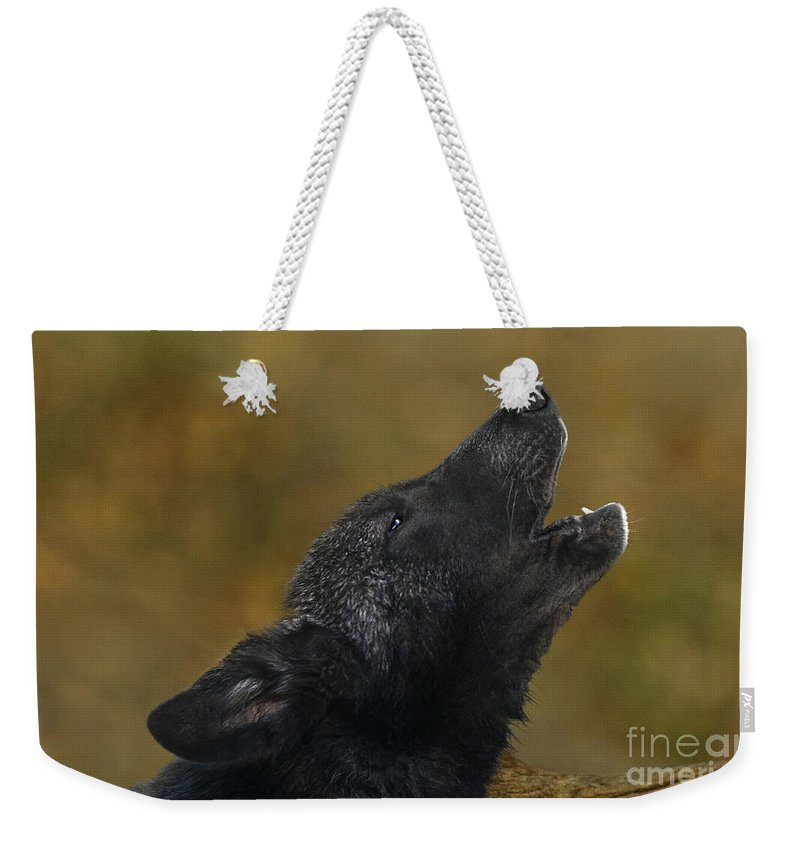 Gray Wolf Weekender Tote Bag featuring the photograph Howling Gray Wolf Pup Endangered Species Wildlife Rescue by Dave Welling