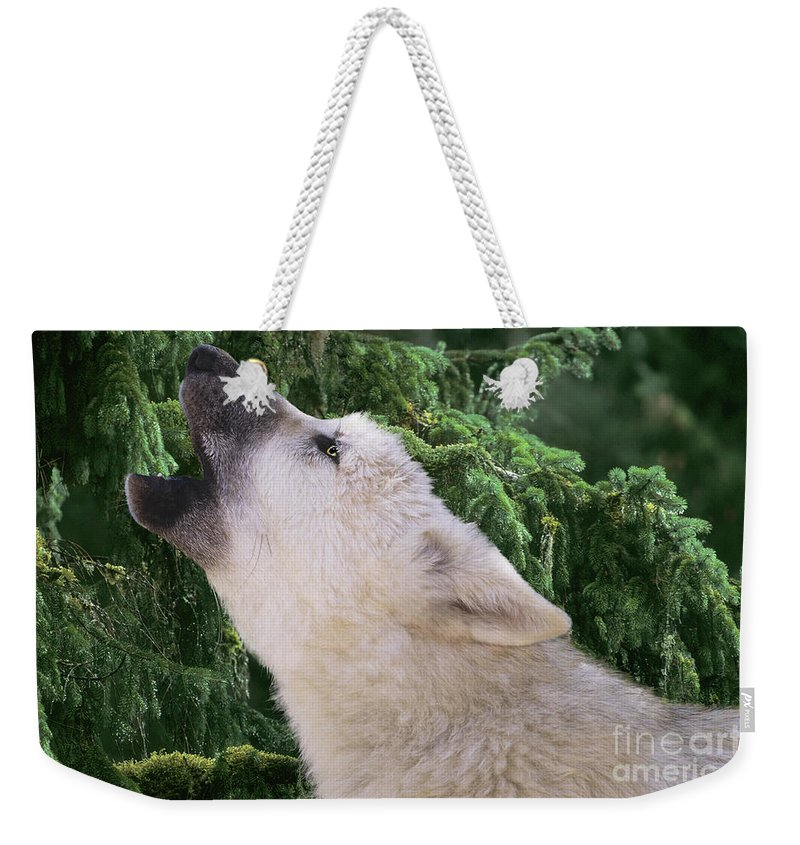 Arctic Wolf Weekender Tote Bag featuring the photograph Howlling Arctic Wolf Pup Endangered Species Wildlife Rescue by Dave Welling