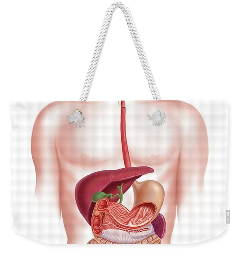 Anus Weekender Tote Bag featuring the digital art Human Digestive System, Artwork by Science Photo Library - Leonello Calvetti