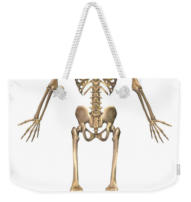 Human Skeletal System Back View Weekender Tote Bag For Sale By
