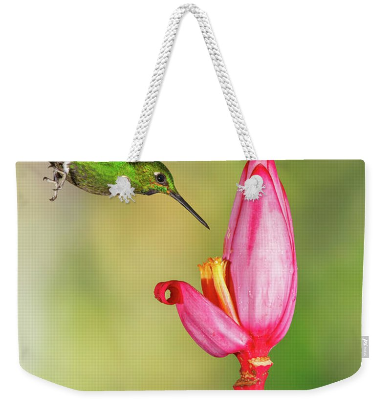 Green-crowned Brilliant Weekender Tote Bag featuring the photograph Hummingbird , Green-crowned Brilliant by Kencanning