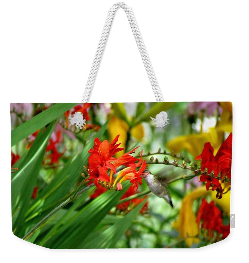Ruby-throated Hummingbird Weekender Tote Bag featuring the photograph Hummingbird Among The Lucifer by Carol Montoya