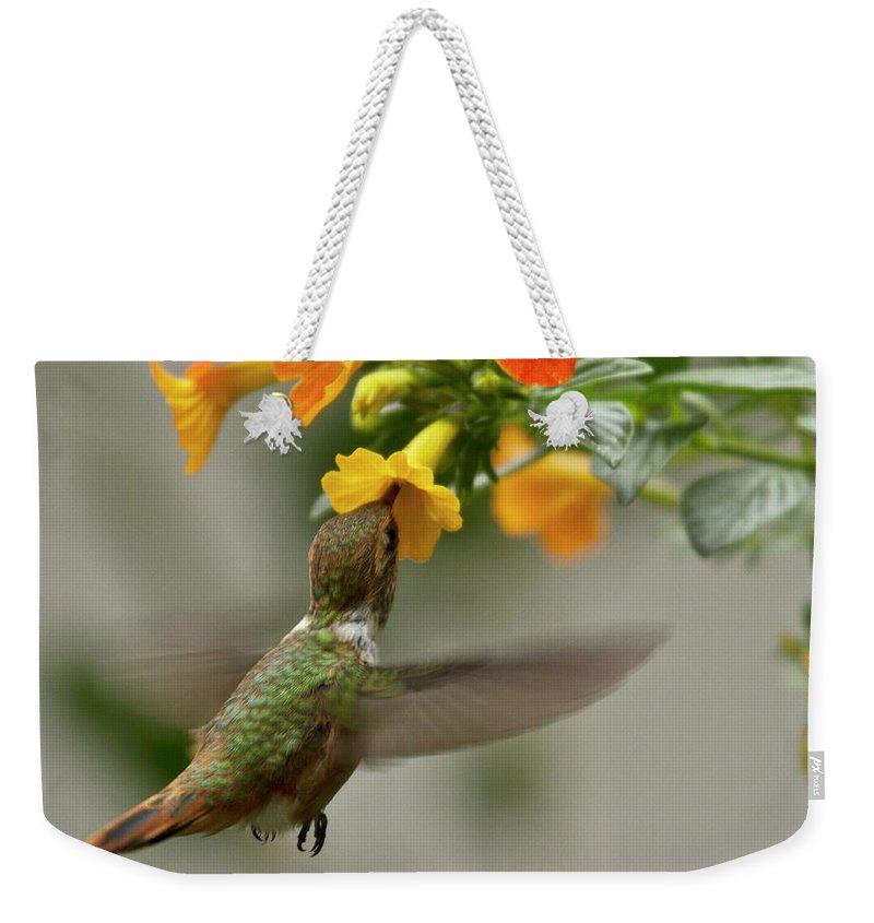 Bird Weekender Tote Bag featuring the photograph Hummingbird Sips Nectar by Heiko Koehrer-Wagner