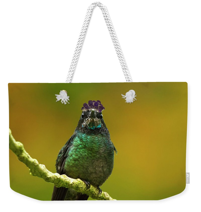 Magnificent Hummingbird Weekender Tote Bag featuring the photograph Hummingbird With A Lilac Crown by Heiko Koehrer-Wagner