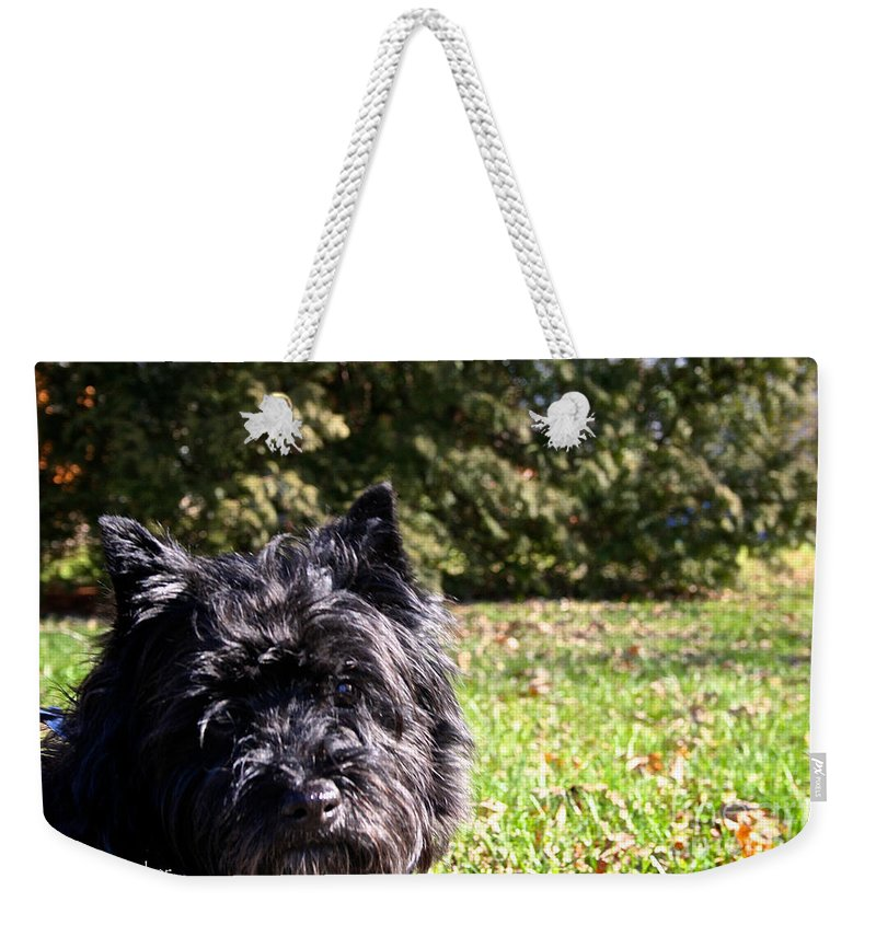 Dog Weekender Tote Bag featuring the photograph Humor Me by Susan Herber