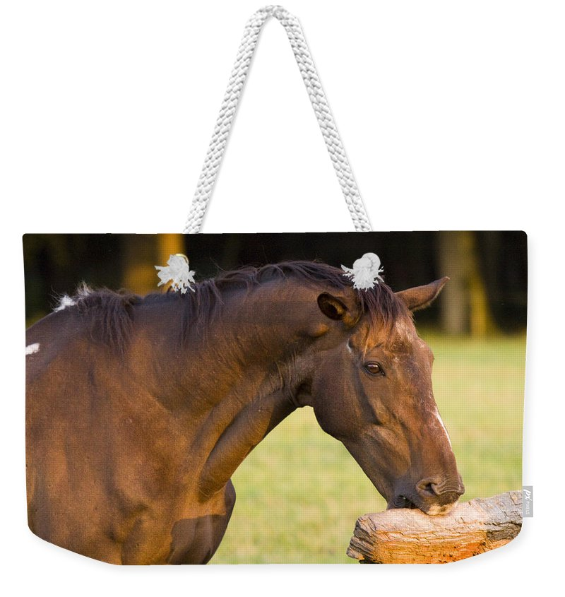Pony Weekender Tote Bag featuring the photograph Hungry by Angel Ciesniarska