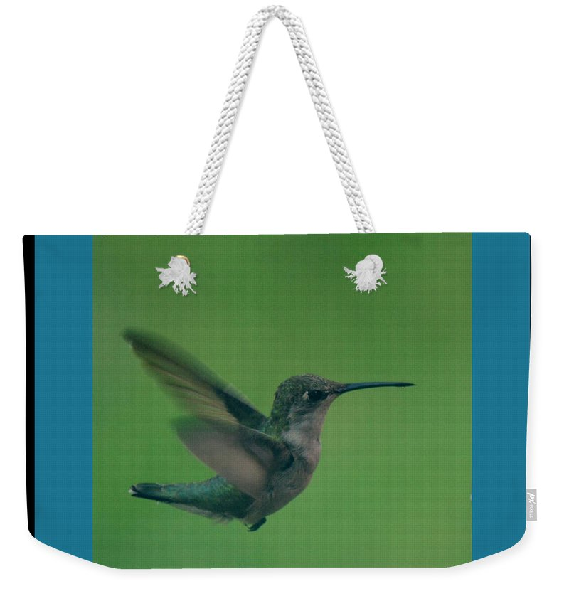 Bird Weekender Tote Bag featuring the photograph Hungry Little Hummingbird 6 by Barb Dalton