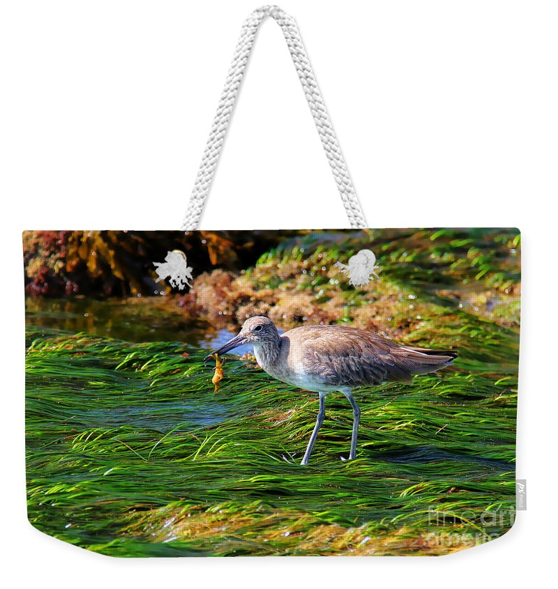 Willet Weekender Tote Bag featuring the photograph Hungry Willet by Kasia Bitner