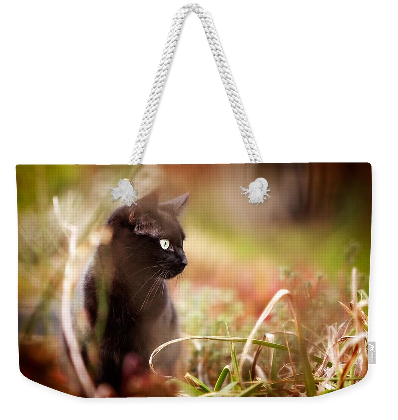 Cat Weekender Tote Bag featuring the photograph Hunter by Ian Good