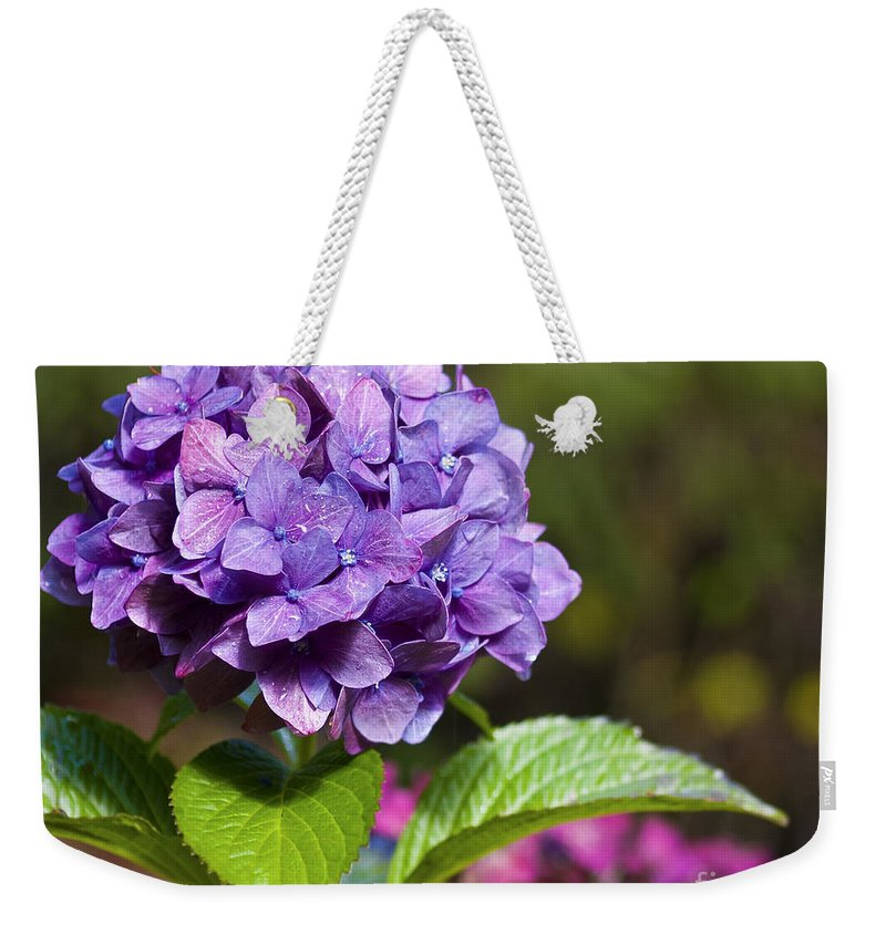 Hydrangea Weekender Tote Bag featuring the photograph Hydrangea by Belinda Greb