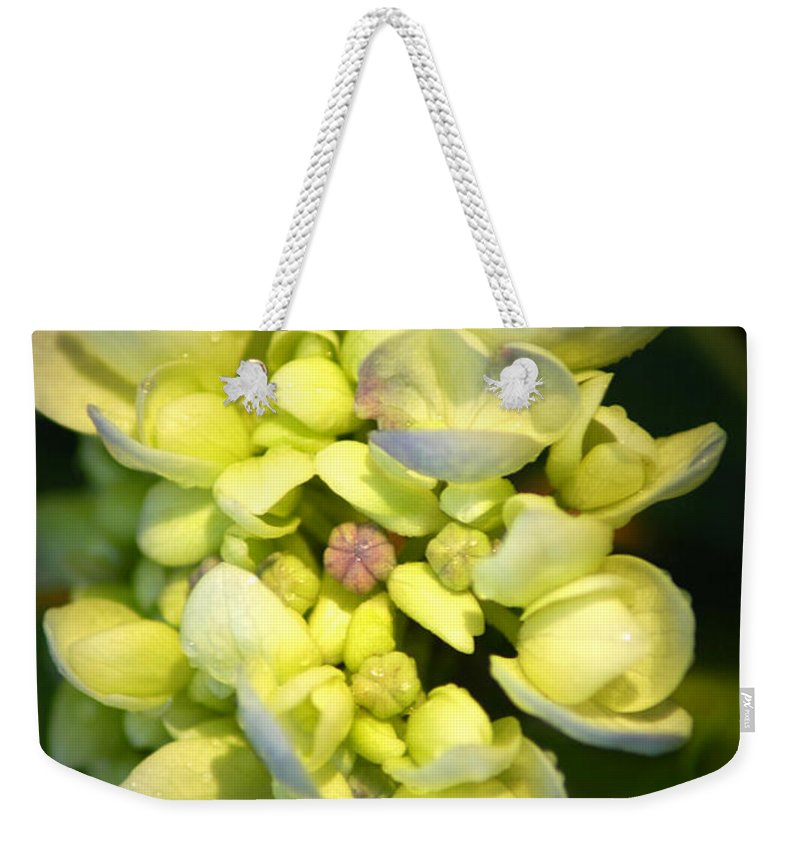 Flower Weekender Tote Bag featuring the photograph Hydrangea by David Weeks