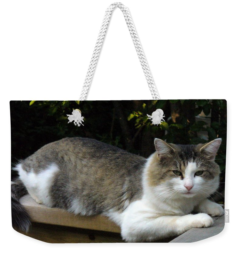 Cat Photography Weekender Tote Bag featuring the photograph I Had A Great Dinner And Now Ready For Nap by Lingfai Leung