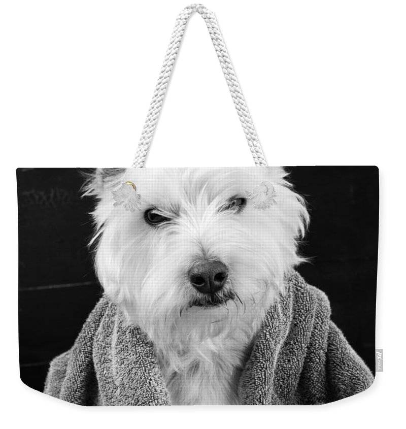 Animal Weekender Tote Bag featuring the photograph I Hate Mondays by Edward Fielding