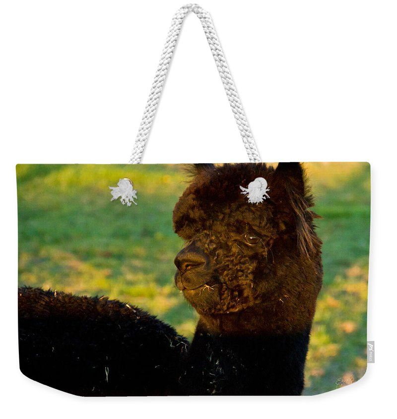 Black Weekender Tote Bag featuring the photograph I Seez You Black Alpaca Portrait by Eti Reid