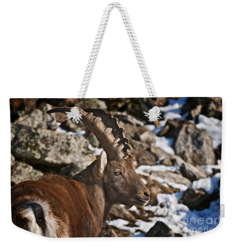 Ibex Weekender Tote Bag featuring the photograph Ibex Pictures 160 by World Wildlife Photography