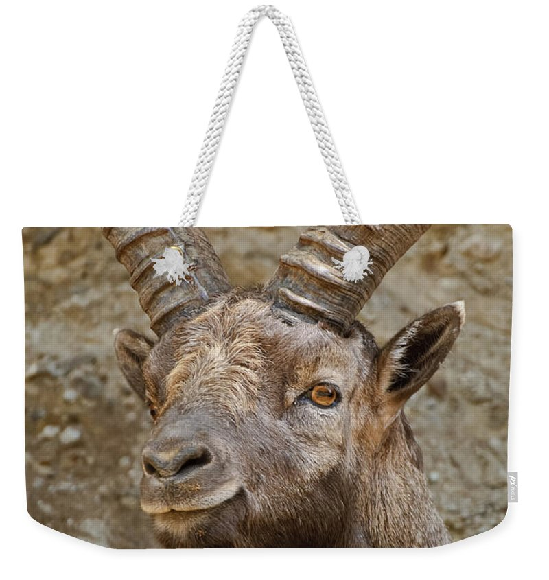 Ibex Weekender Tote Bag featuring the photograph Ibex Pictures 40 by World Wildlife Photography