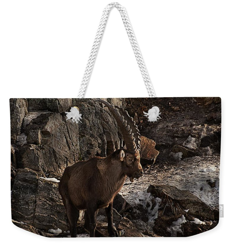 Ibex Weekender Tote Bag featuring the photograph Ibex Pictures 86 by World Wildlife Photography