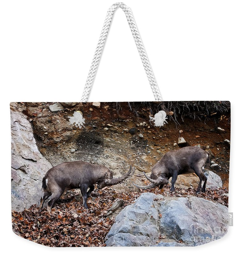 Ibex Weekender Tote Bag featuring the photograph Ibex Pictures 134 by World Wildlife Photography