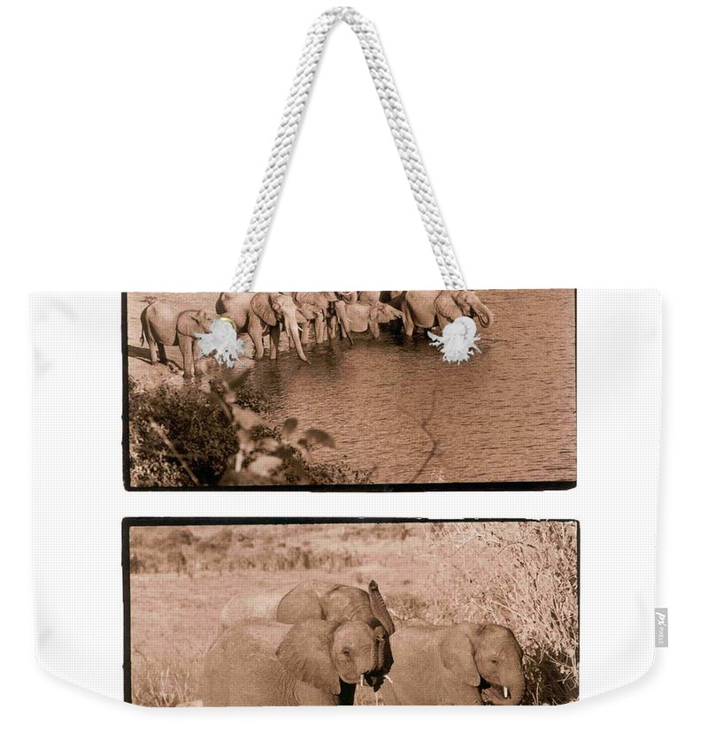Africa Weekender Tote Bag featuring the photograph Elephants by Nancy Ingersoll