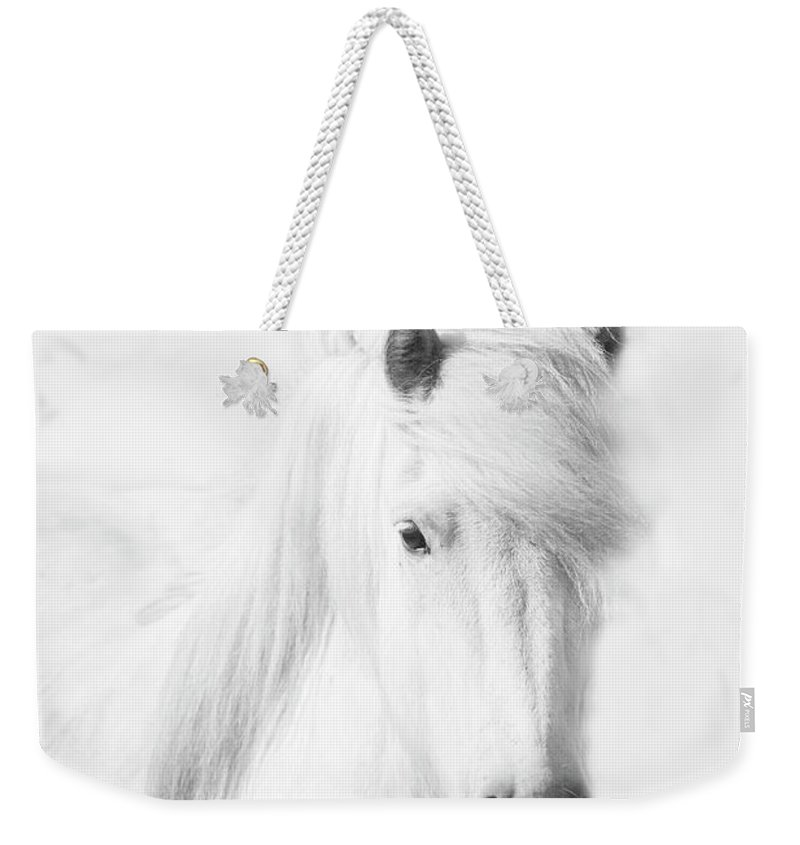 White Background Weekender Tote Bag featuring the photograph Icelandic Pony In White by Grant Faint