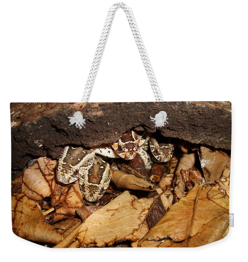 Puff Adder Weekender Tote Bag featuring the photograph Identity Crisis Baby Puff Adders Bitis Arietans by Tracey Beer