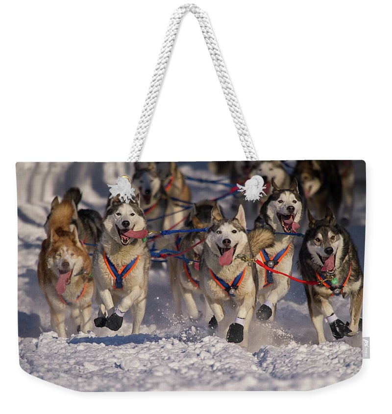 Snow Weekender Tote Bag featuring the photograph Iditarod Huskies by Alaska Photography