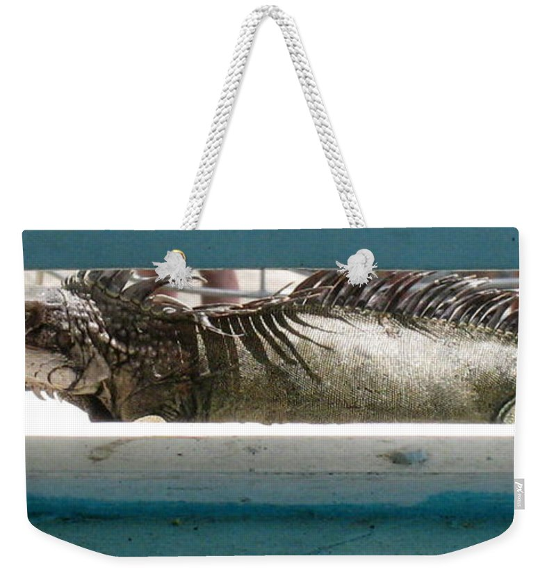 Animal Photographs Weekender Tote Bag featuring the photograph Iggy by Jennifer E Doll
