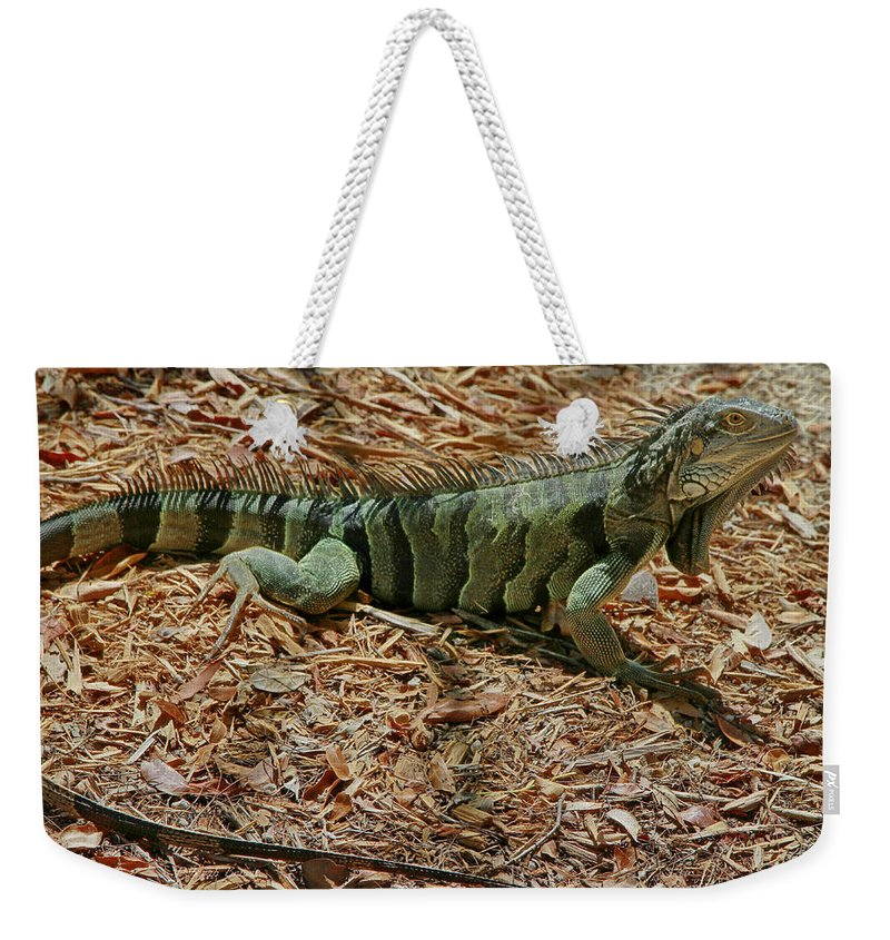 Iguana Weekender Tote Bag featuring the photograph Iguana With A Smile by Deborah Benoit