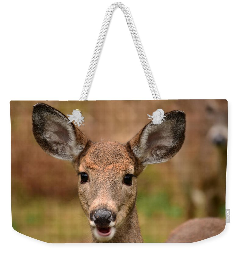 Deer Weekender Tote Bag featuring the photograph I'm Never Alone by Lori Tambakis