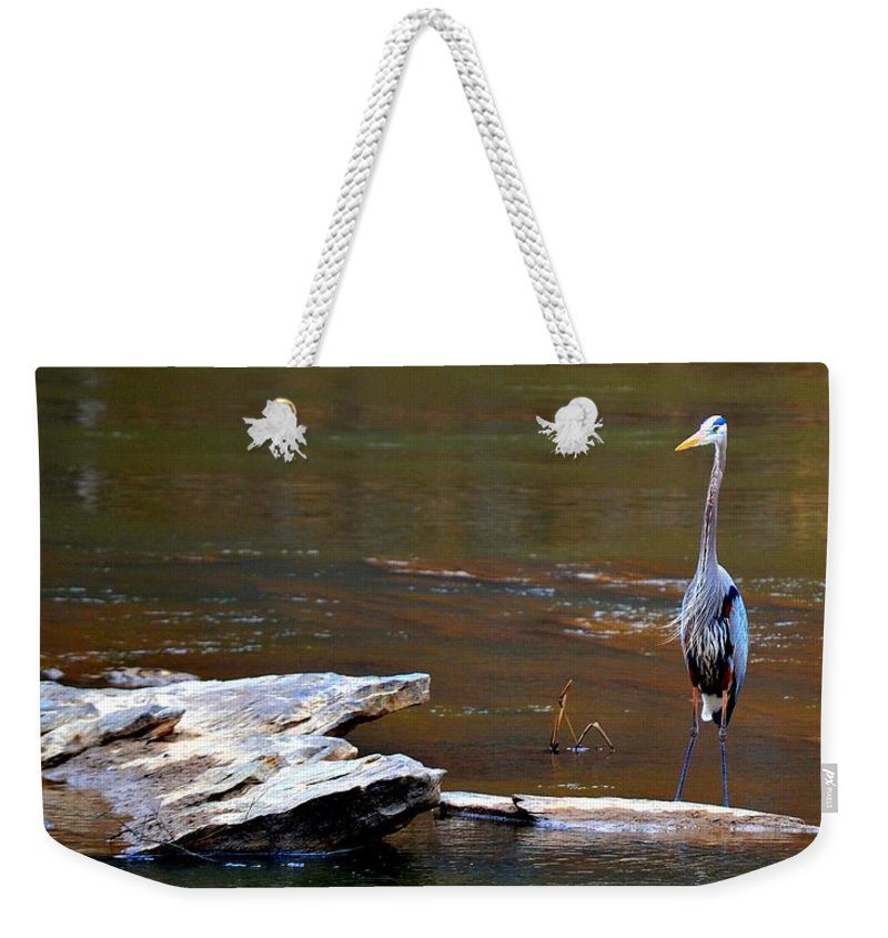 Heron Weekender Tote Bag featuring the photograph I'm Watching You by Tara Potts