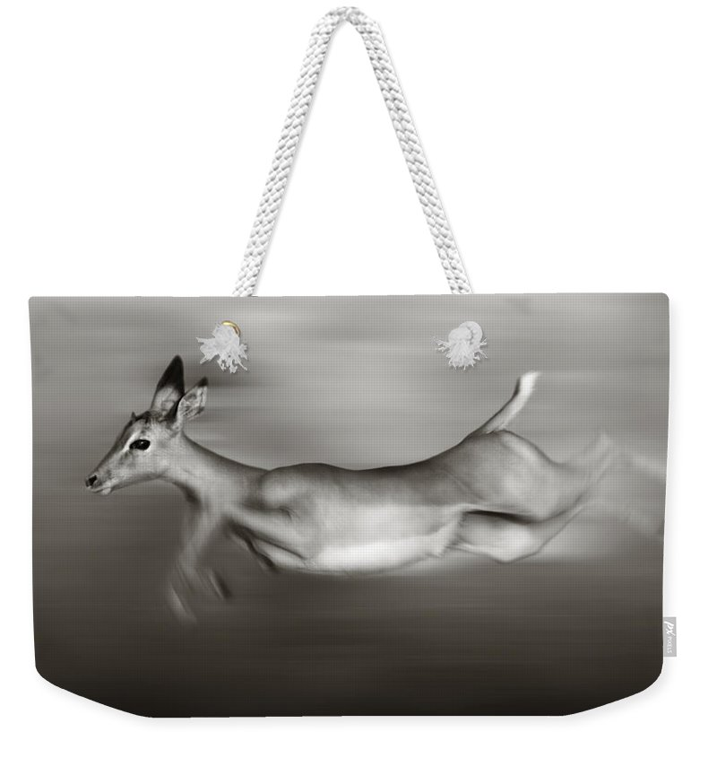 Outdoor Weekender Tote Bag featuring the photograph Impala Running by Johan Swanepoel