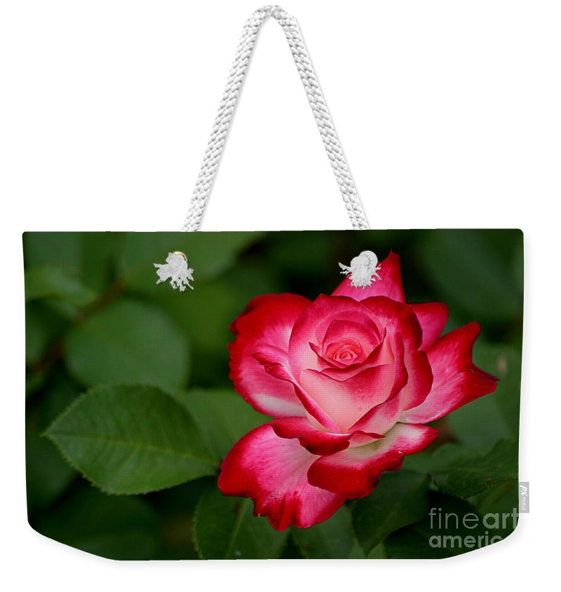 Roses Weekender Tote Bag featuring the photograph In All It's Beauty by Living Color Photography Lorraine Lynch