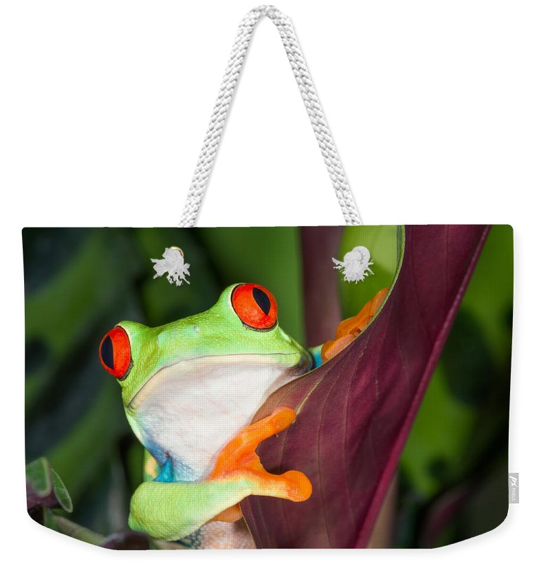 Red-eyed Tree Frog Weekender Tote Bag featuring the photograph In Awe by Cheryl Schneider