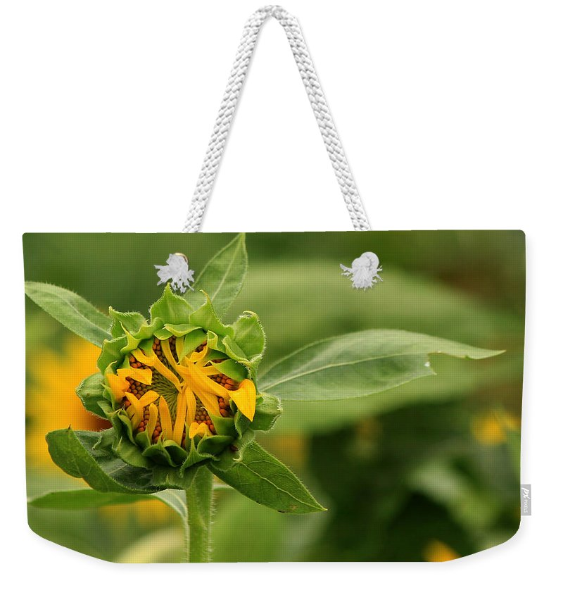 Sunflowers Weekender Tote Bag featuring the photograph In Progress by Amy Warr