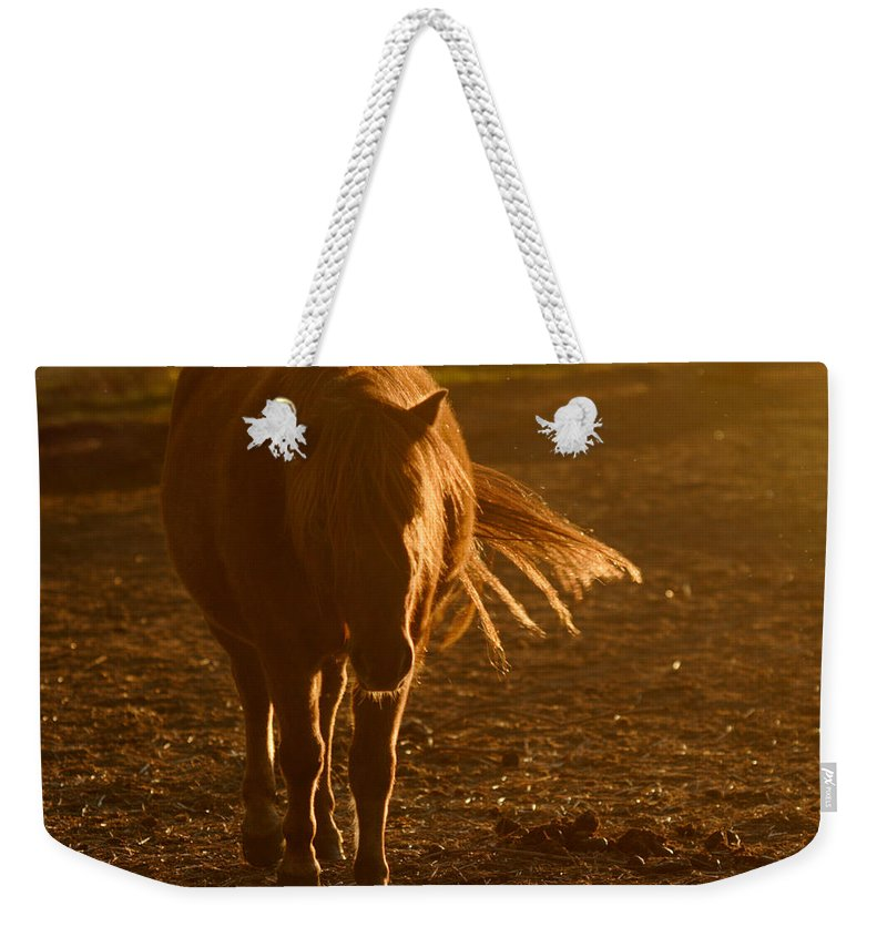 Horse Weekender Tote Bag featuring the photograph In The Golden Light by Angel Ciesniarska