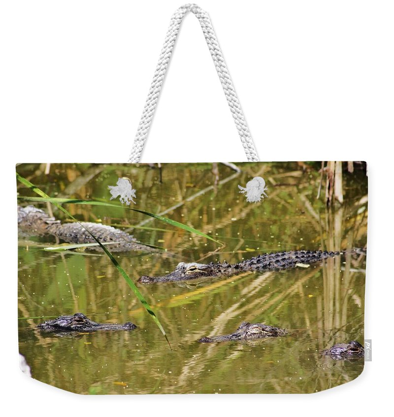 Everglades Weekender Tote Bag featuring the photograph In The Reflection by Chuck Hicks