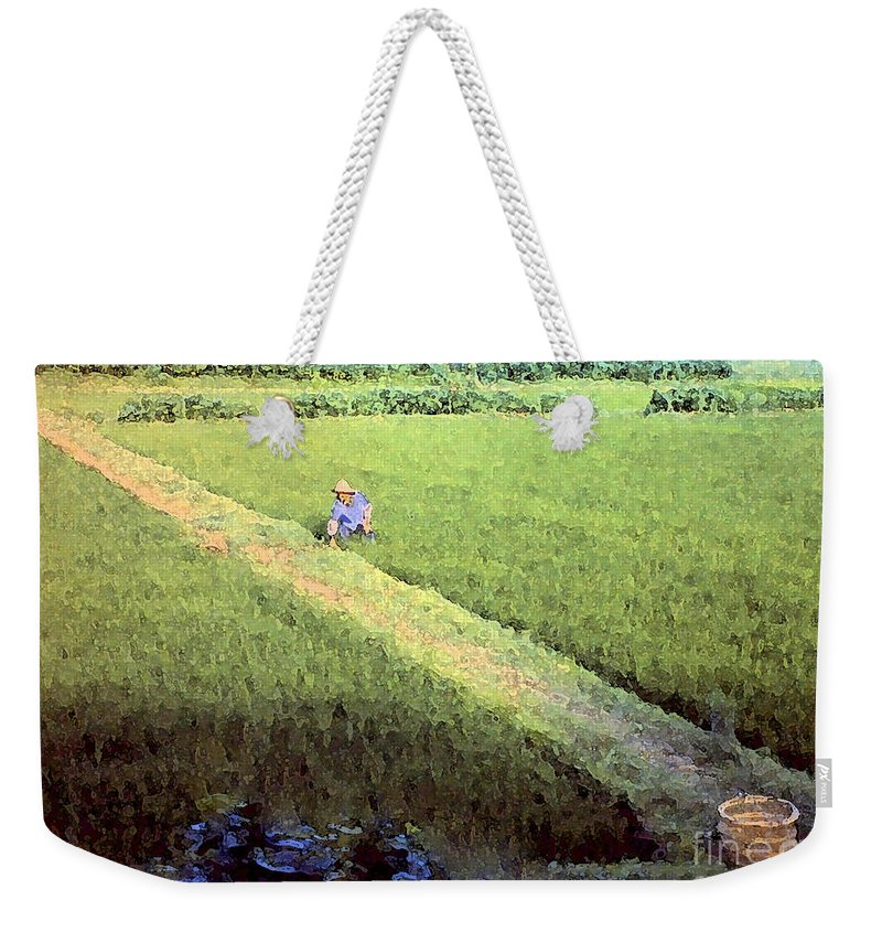 Rice Fields Weekender Tote Bag featuring the photograph In The Rice Fields by Lydia Holly