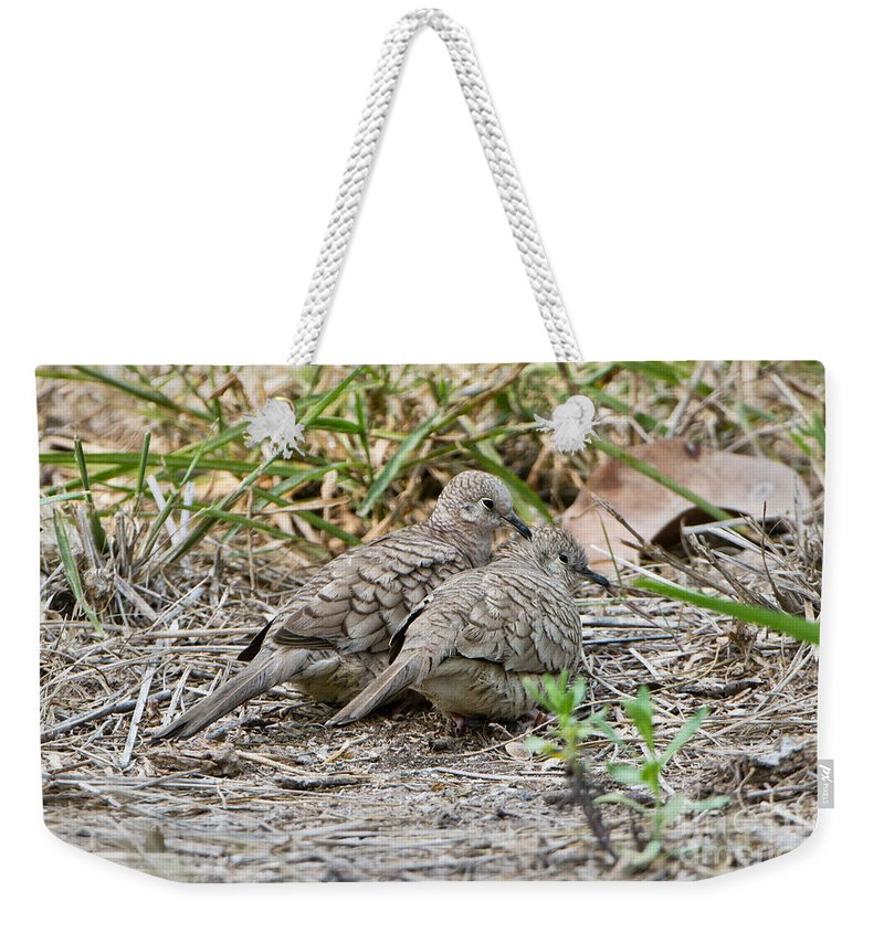 Inca Dove Weekender Tote Bag featuring the photograph Inca Doves by Anthony Mercieca